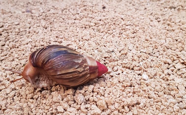 House Sit Snail